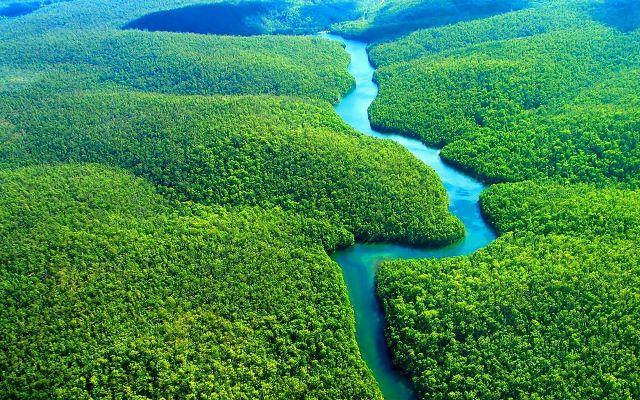 10 khu rừng độc đáo nhất trên thế giới