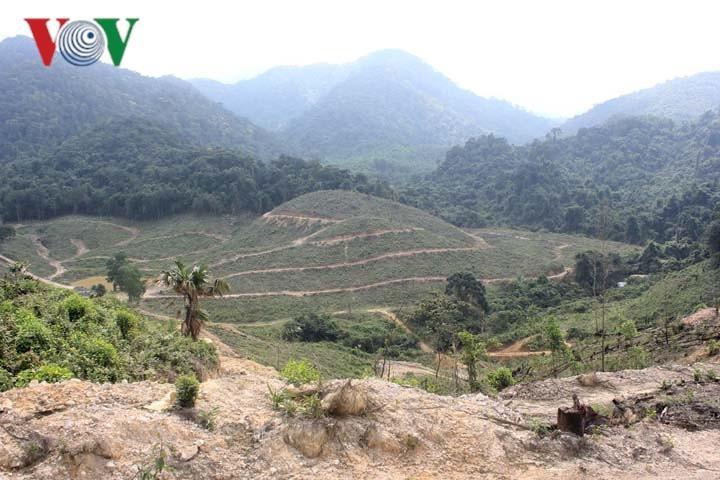 Ai phá hơn 10 ha rừng gỗ quý ở Khe Giữa?