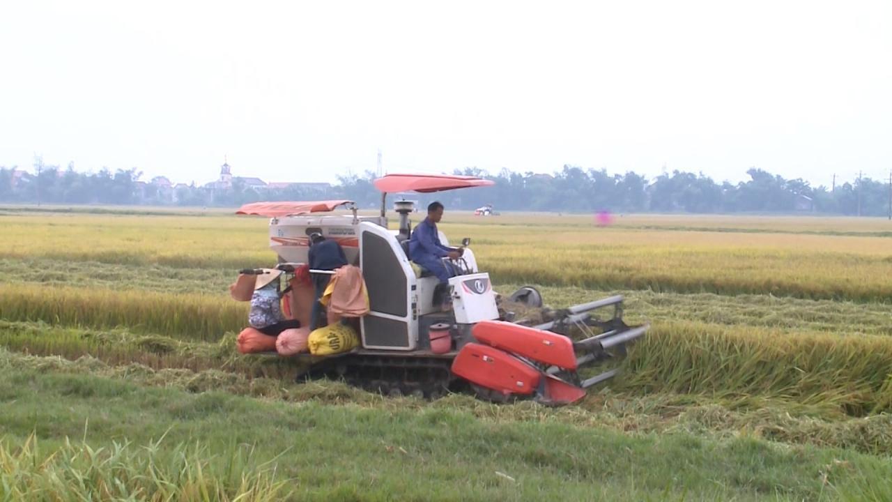 Ba Đồn: Năng suất lúa Đông xuân đạt cao nhất từ trước đến nay