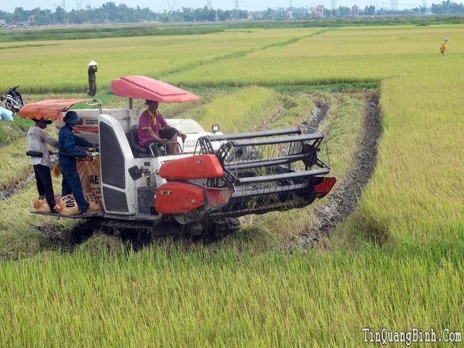 Bảo đảm nước tưới cho vụ sản xuất hè-thu