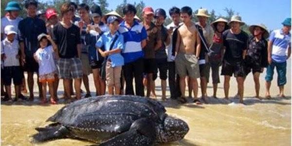Bắt được loài rùa quý hiếm