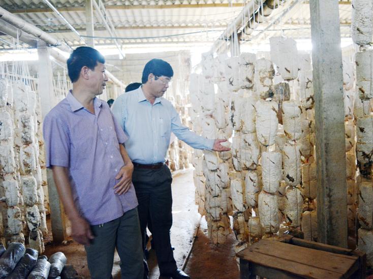 Bố Trạch: 3 bộ sản phẩm được công nhận sản phẩm công nghiệp nông thôn tiêu biểu cấp tỉnh