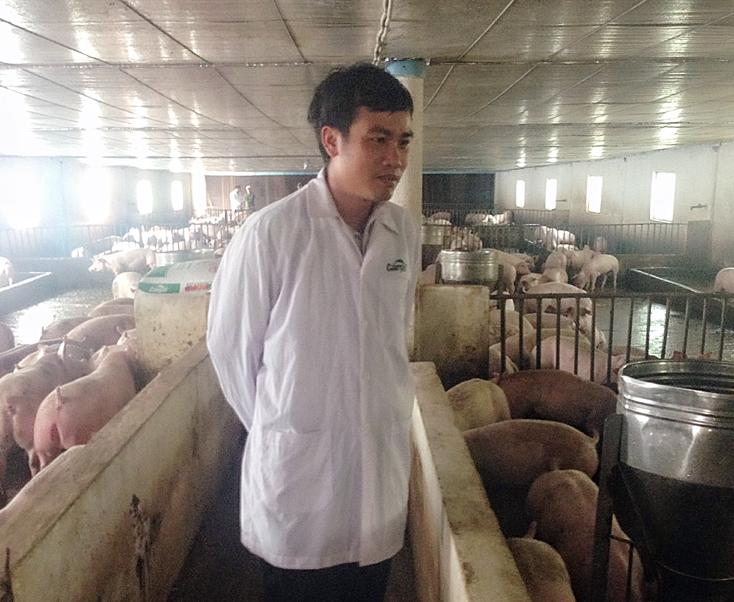 Bố Trạch: Đàn gia súc, gia cầm tăng trở lại