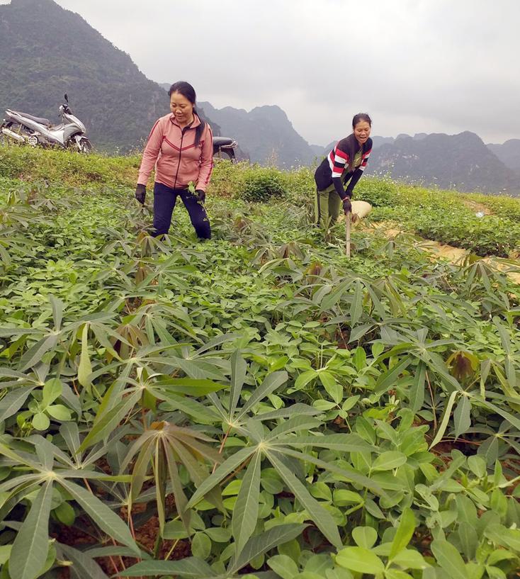 Bố Trạch: Hỗ trợ trên 800 triệu đồng chuyển đổi cơ cấu cây trồng