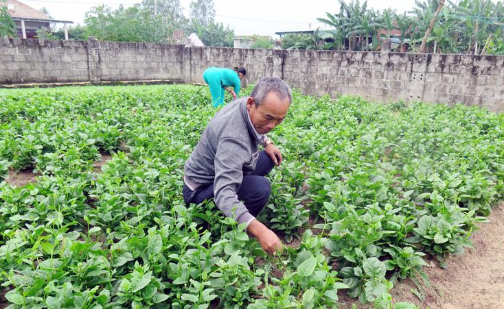 Bố Trạch: Nông nghiệp sạch, vì sức khỏe cộng đồng