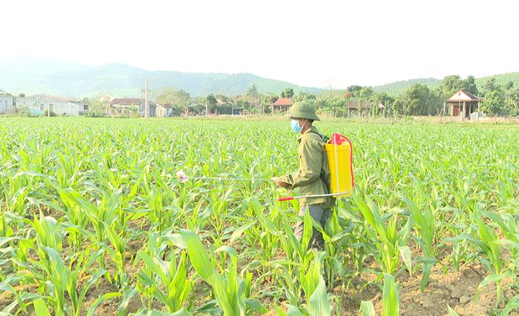 Bố Trạch: Tăng cường phòng, chống sâu keo mùa thu hại ngô