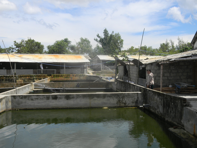 Cam Thuỷ (Lệ Thủy): Nhiều gia trại thu nhập cao từ chăn nuôi