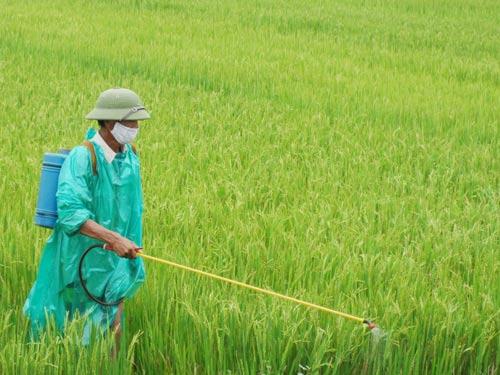 Cảnh báo chuột và sâu bệnh hại lúa Hè Thu