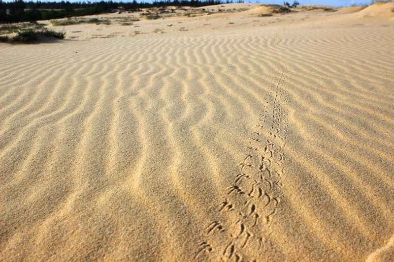 """Chùm ảnh: Đẹp mê hồn """"thiên đường"""" cồn cát Quang Phú"""