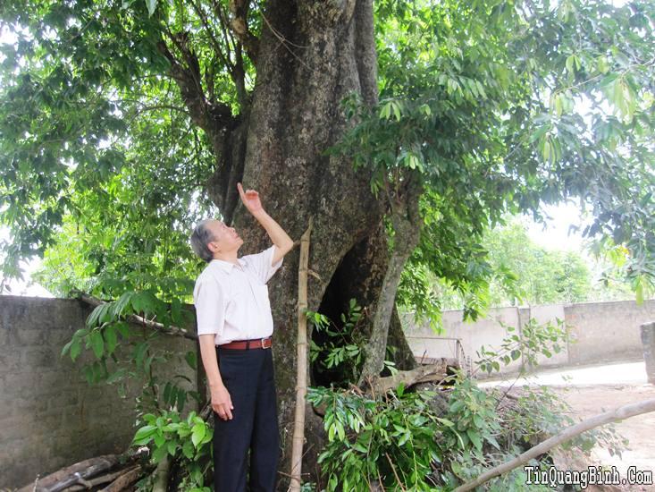 Chuyện về làng thị hàng trăm năm tuổi ở Quảng Bình