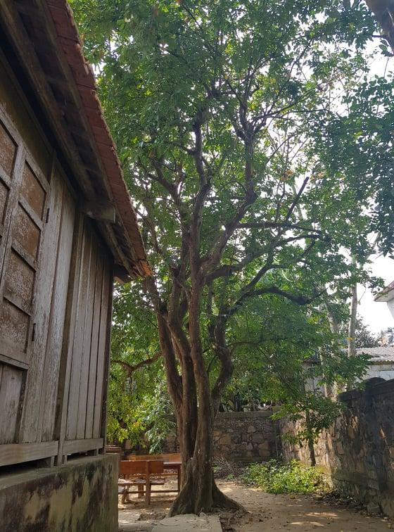 Chuyện xúc động về mảnh vườn gắn với tuổi thơ Đại tướng Võ Nguyên Giáp