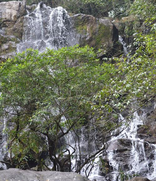 Công nhận Điểm du lịch sinh thái và diễn giải môi trường Vườn thực vật thuộc Vườn Quốc gia Phong Nha – Kẻ Bàng