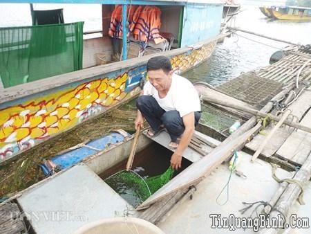 Đặc sắc nuôi cá chình ở miền di sản