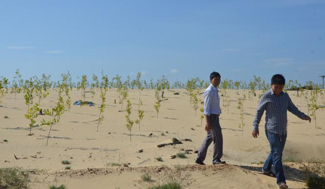 Đầu tư hơn 97 tỷ đồng trồng và chăm sóc rừng phòng hộ ven biển