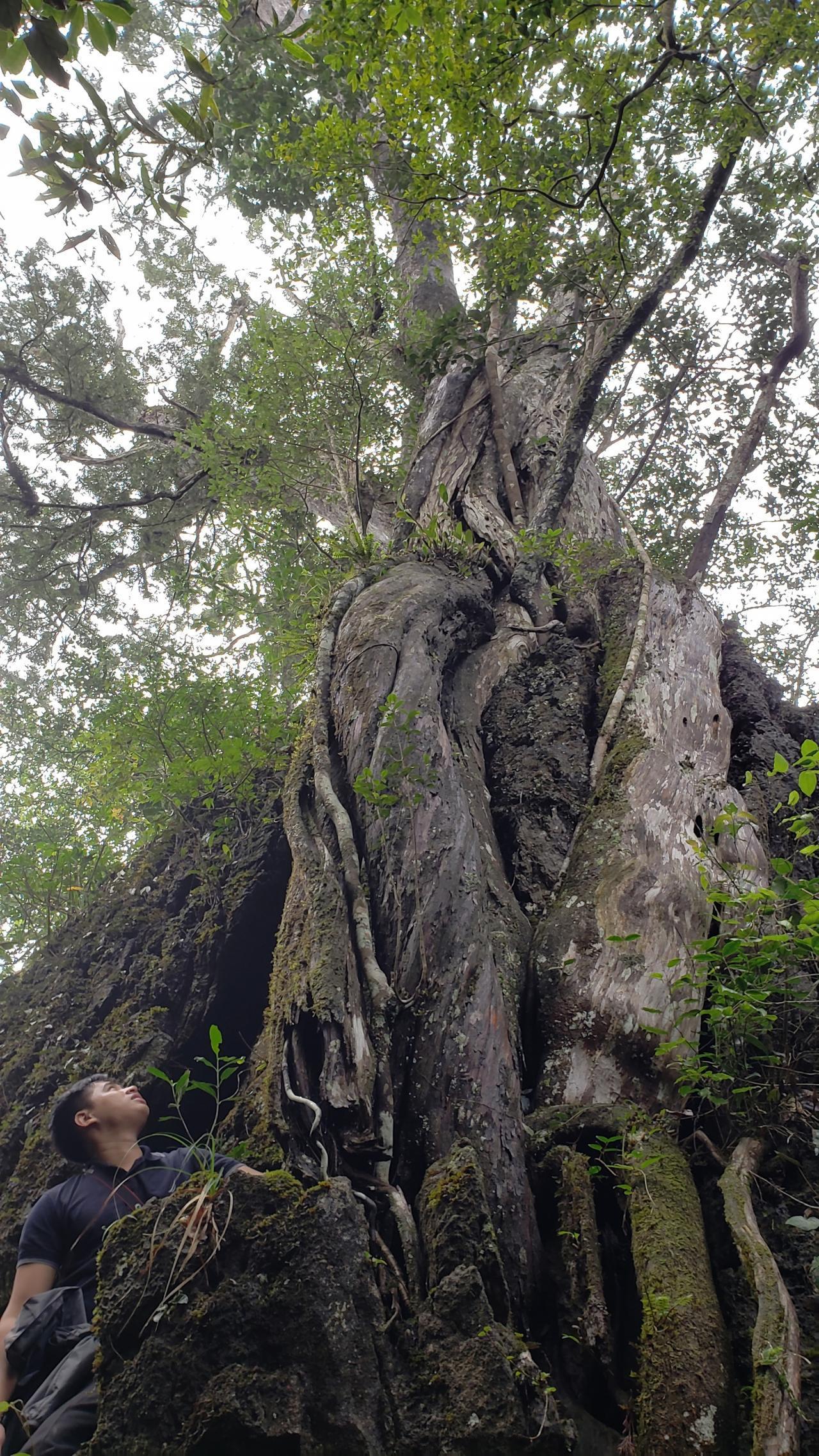 Đi tìm rừng thiêng - Kỳ 1: Chinh phục đỉnh bách