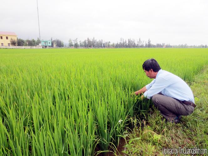 Đổi mới phương thức sản xuất: Bước tiến dài cho nông nghiệp hiện đại