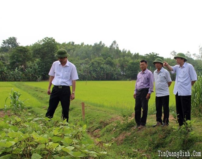 Đồng chí Phó Bí thư Thường trực Tỉnh ủy kiểm tra tình hình sản xuất tại huyện Quảng Trạch