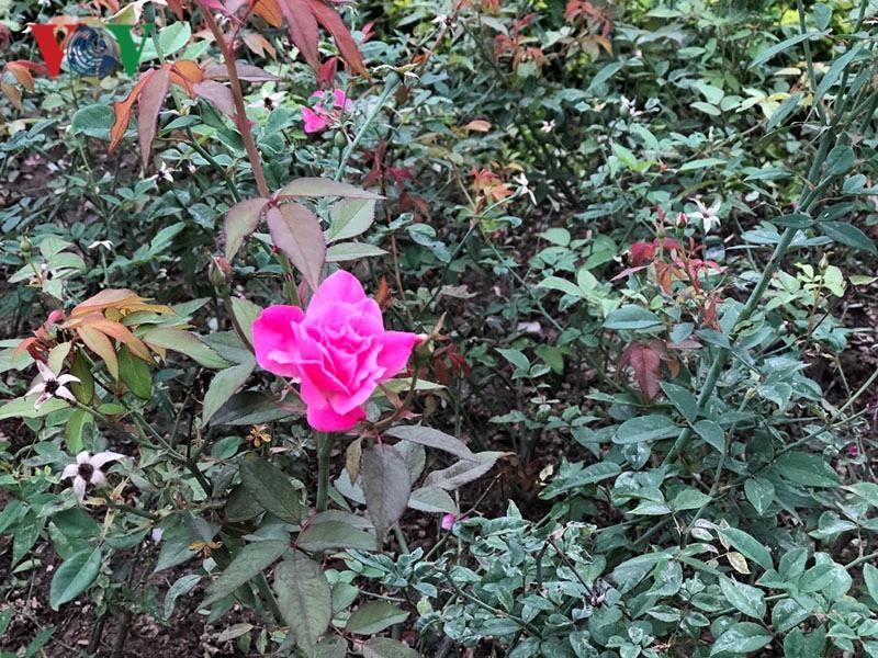 Đồng Hới - lãng mạn Thành phố hoa hồng