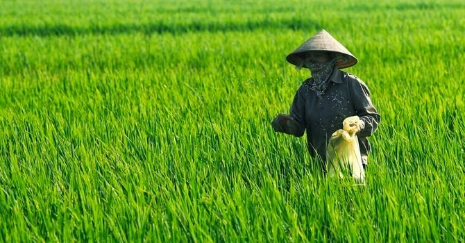 Gần 100 ha đất trồng lúa và trồng rừng tại Quảng Bình thành đất dự án