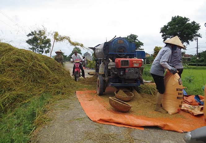 Giao thông và... lúa
