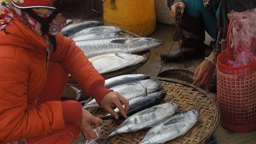 Hải sản Quảng Bình giá tăng cao vẫn cháy hàng trong dịp lễ