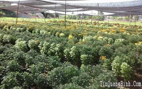 Hiệu quả mô hình chuyển đổi cây trồng ở tỉnh Quảng Bình