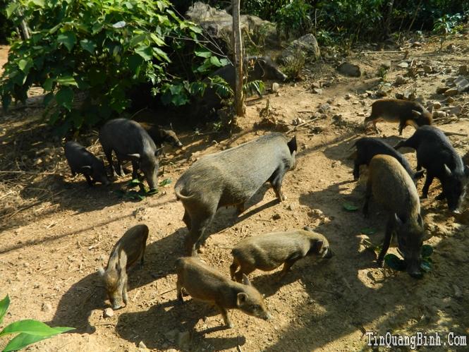 Hiệu quả từ mô hình kinh tế trang trại ở Quảng Tiên
