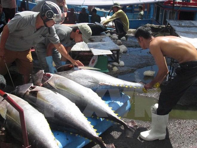 Hơn 14.500 tỷ đồng xây dựng 6 trung tâm nghề cá lớn trong cả nước