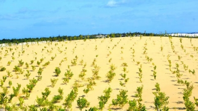Hơn 97 tỷ đồng trồng và chăm sóc rừng phòng hộ ven biển Quảng Bình