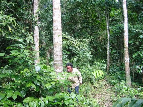 Huyền bí Phong Nha - Kẻ Bàng - Kỳ 7: Chủ nhân kỳ lạ của rừng già