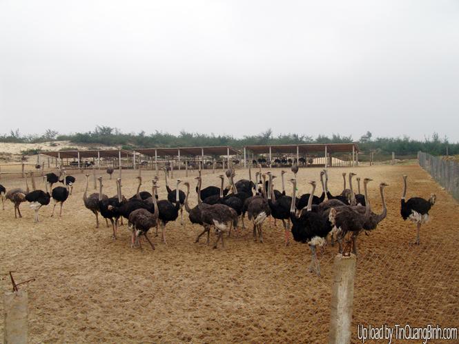 Khởi sắc vùng cát Quảng Ninh