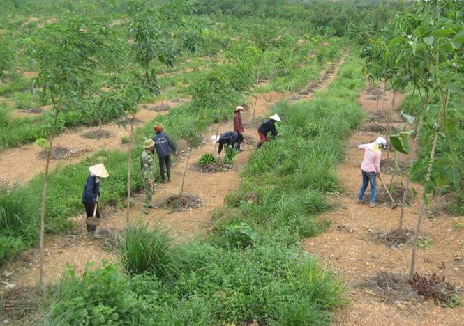 Khuyến cáo các địa phương, đơn vị trồng cao su trong phạm vi đất đai được quy hoạch