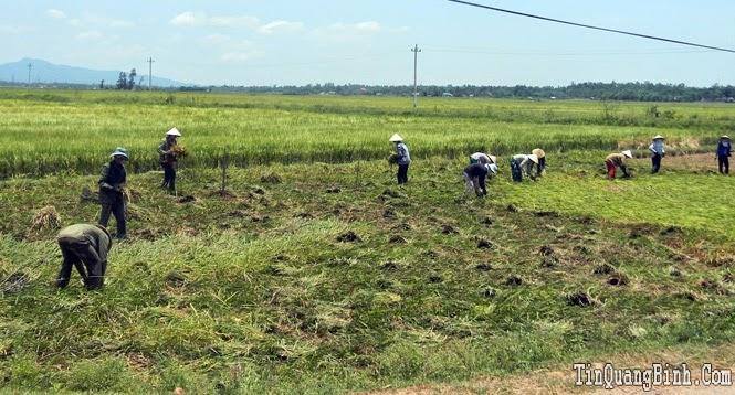 Kinh tế tỉnh Quảng Bình có dấu hiệu khởi sắc