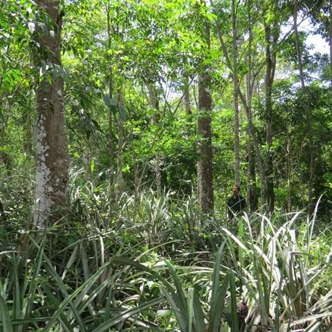 Lạc vào khu rừng toàn gỗ quý ở Quảng Bình