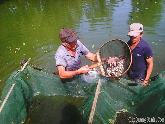 Làm giàu từ mô hình nuôi cá giống