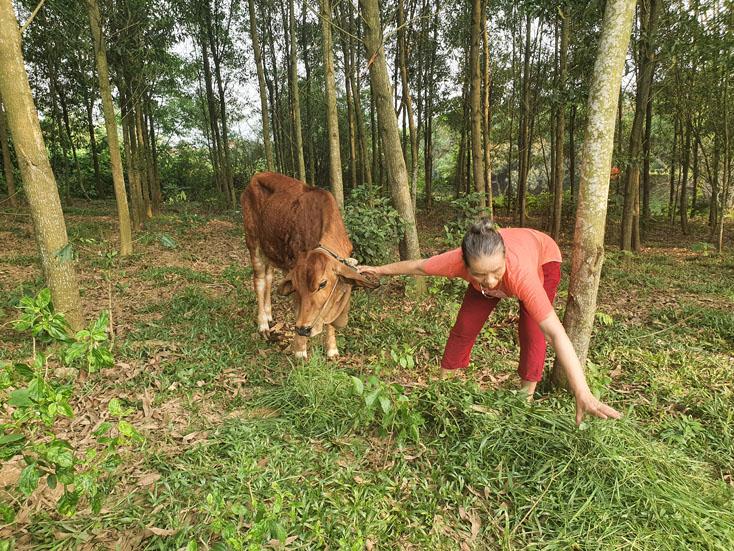 Lệ Thủy: Công bố hết dịch Viêm da nổi cục trên đàn trâu, bò tại xã Tân Thủy và Hưng Thủy
