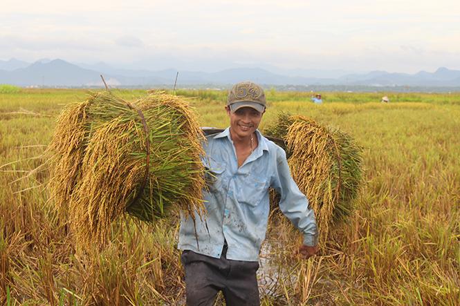 Lệ Thủy: Hỗ trợ 100% giống lúa cho diện tích mới chuyển sang sản xuất vụ hè-thu