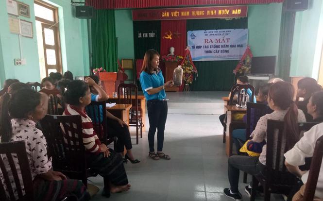 Lệ Thủy: Thành lập tổ hợp tác trồng nấm ở xã Kim Thủy