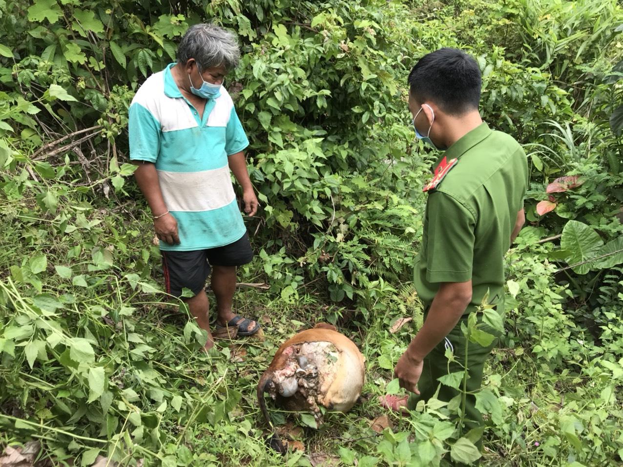 Minh Hóa: Bắt nhóm đối tượng giết trộm bò làm mồi nhậu