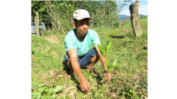 Minh Hóa: Cung ứng không đúng hơn 40.000 cây giống, dân nghèo điêu đứng