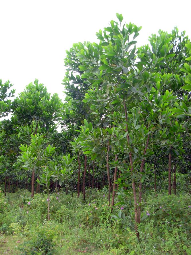 Minh Hoá đã giao trên 86.000ha rừng và đất lâm nghiệp cho tổ chức, hộ gia đình khoanh nuôi, bảo vệ