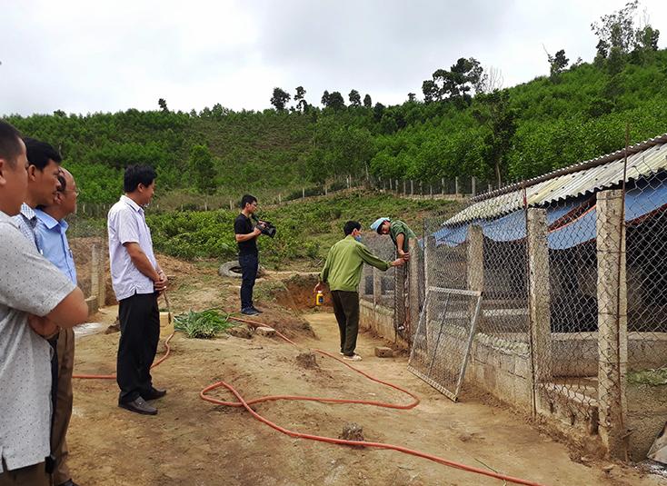 Minh Hóa: Khẩn trương ngăn chặn dịch tả lợn châu Phi