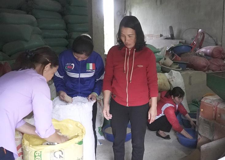 Nâng cao giá trị cây lúa Quảng Bình