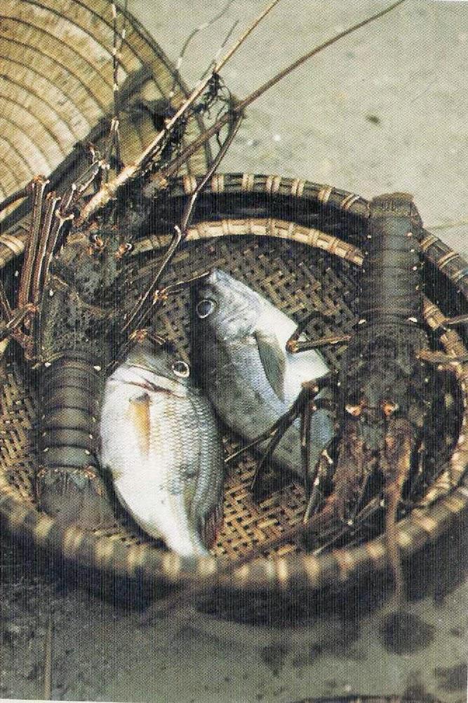 Ngắm quê hương Quảng Bình năm 1973 trong ống kính người Nhật