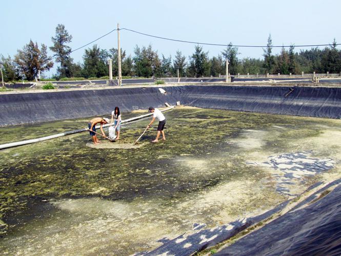 Nghề nuôi tôm trên cát ở Hải Ninh: Người dân bỏ hoang ao hồ vì thua lỗ