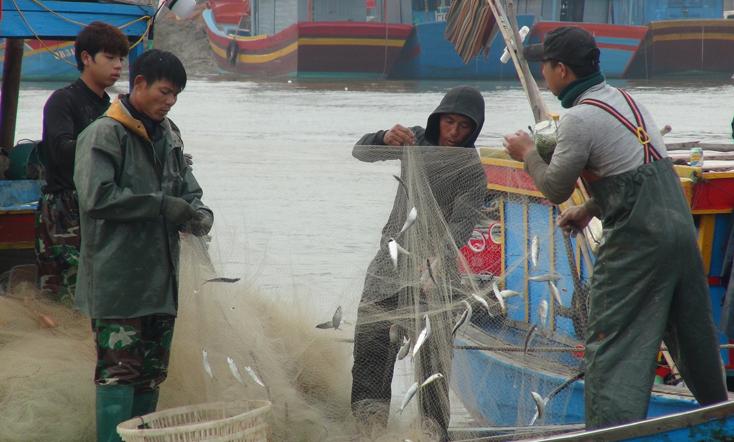 Ngư dân được mùa cá trích…