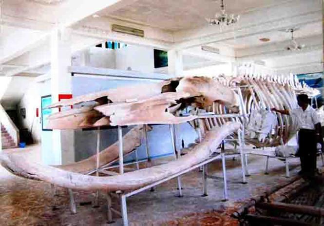 Người dân xem bộ xương cá voi 'khủng' cách đây 200 năm là báu vật
