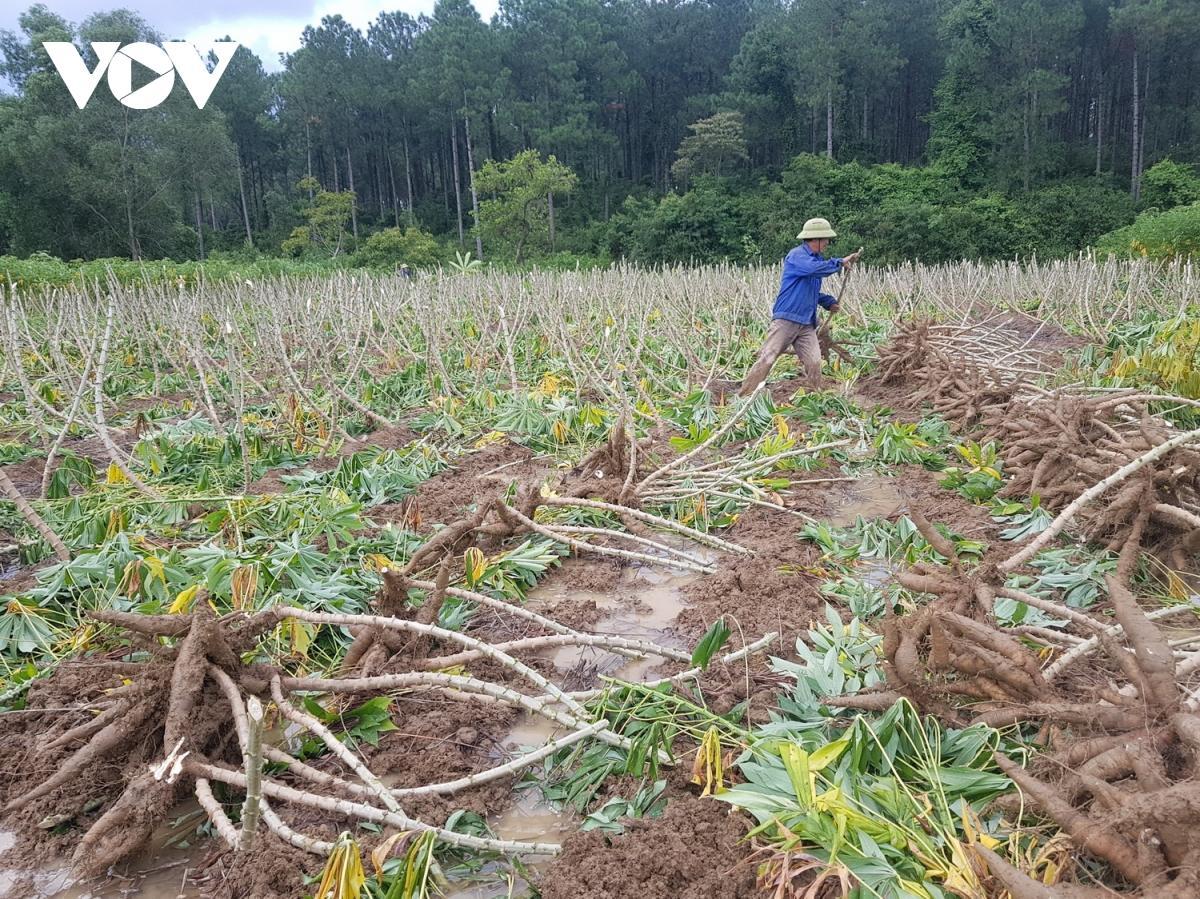 """Nhà máy chế biến hoàn thành phương án """"3 tại chỗ"""" để kịp thu mua sắn cho nông dân"""