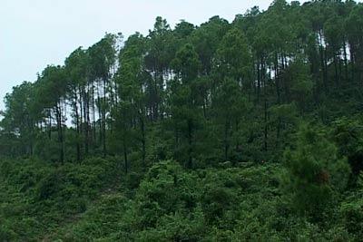 Nổ súng giải quyết tranh chấp đất rừng