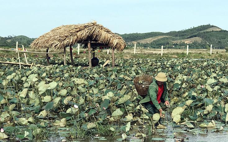 Nông dân Bố Trạch tất bật vụ hoa Tết